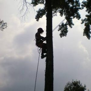 Trickytrees Tree Felling